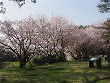 佐賀まで桜の写真を撮りに行って来た♪