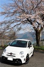 櫻の写真でも・・・