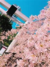 乃木坂神社の桜満開からのGT SPORTアップデートこれからやってみるか