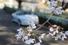 桜の季節だから近所を一廻り