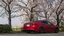 ☆桜と撮影☆