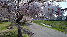 ついでに桜を撮す