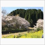 春満開〜おはです!