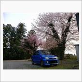 【桜】・・・。