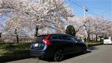 桜、車が良くてもカメラマンが・・・