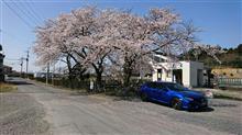 桜とシビックと色々と