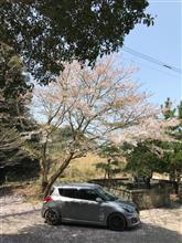 桜が終わるのも早いね