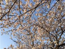 ご近所お花見散歩!(^^)!