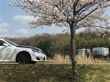 桜が散る前に(*^o^*)