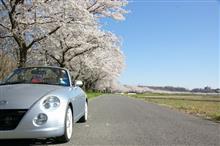 今年の桜は大満足、月曜のリベンジも♪