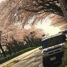 桜とハスラーにラーメンのおまけつき…