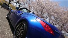 今日は満開の桜巡り