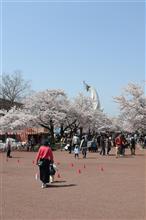 桜吹雪と(*´艸`)
