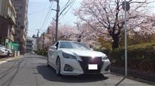 春で~す♪桜で~す♪