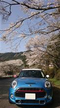 桜満開🌸一の坂川と桜の下で(^_-)-☆
