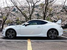桜の風景求めっ