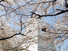 桜まつり☆