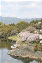 親父様レンズpart2「桜淵公園」の桜に満足できず(^_^;)
