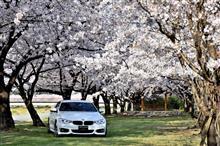 秩父へ桜三昧ドライブ