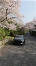 桜とアテ君