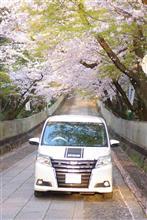メタラー教団 京の桜撮影会
