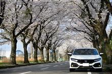 桜を撮りにお出かけ。