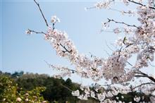新春あんぱん会でお花見に行ってきました!