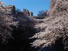 恒例地元桜巡り。
