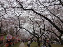 2018年  桜の花見