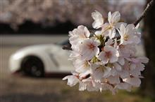念願の桜とコラボ!!からの・・・やっぱり朝練(^^♪