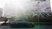 桜求めてご近所ツーリング