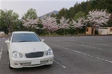 平成30年の桜と記念撮影