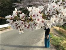 桜開花の一週間・・・な話