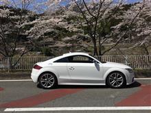桜ドライブ。秩父、東秩父、定峰峠あたり。