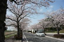 桜2018 Part2 C300(W204)