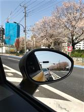 桜舞い散るドライブ