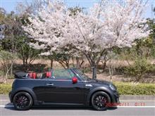 桜に誘われて、ほんまかいな、とりとめもない、行動報告です(汗)