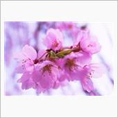 春快走 🏍 奥多摩へ