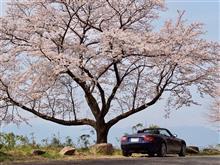 2018桜ドライブ2 琵琶湖周辺の桜