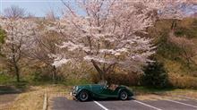 桜とMORGAN