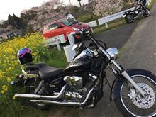 桜と菜の花(*´∀`*)
