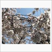 お花見撮影会୧(ᕯ˙ᗨ˙ᕯ)୨