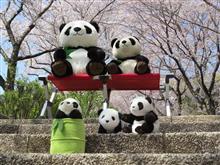 日曜日はパンダと花見へ…