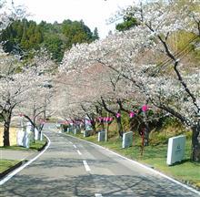 春やねー(о´∀`о)