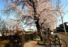 ちょっと新しい春・・・?
