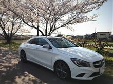愛車🚗と桜🌸