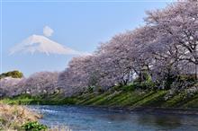 龍巖淵と岩本山の桜(静岡県・富士市)