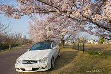 春爛漫 桜の下で撮影会♪