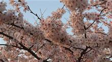 立石カフェと桜プチオフ