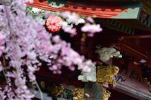 花咲ける神野寺再訪